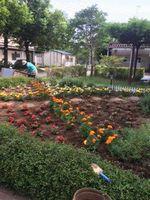 spring-garden05