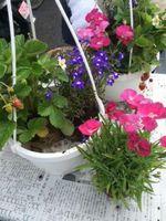 spring-garden07