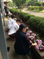 spring-garden10