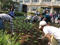 令和元年度 春の緑化活動